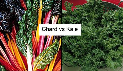 PlanterTomato Chard vs Kale