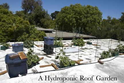PlanterTomato Vegetable Gardening: Hydroponics