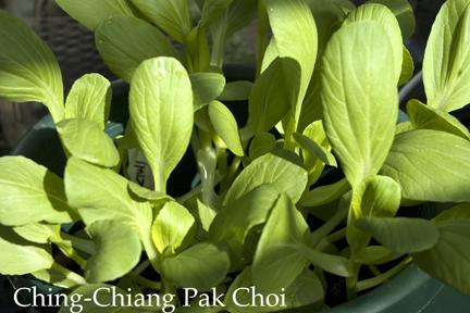 Plantertomato Vegetable Gardening Podcast Garden Planning
