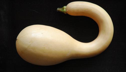ZucchinoRampicanteWinter2