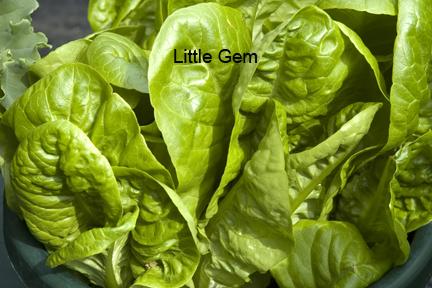 PlanterTomato_LittleGem