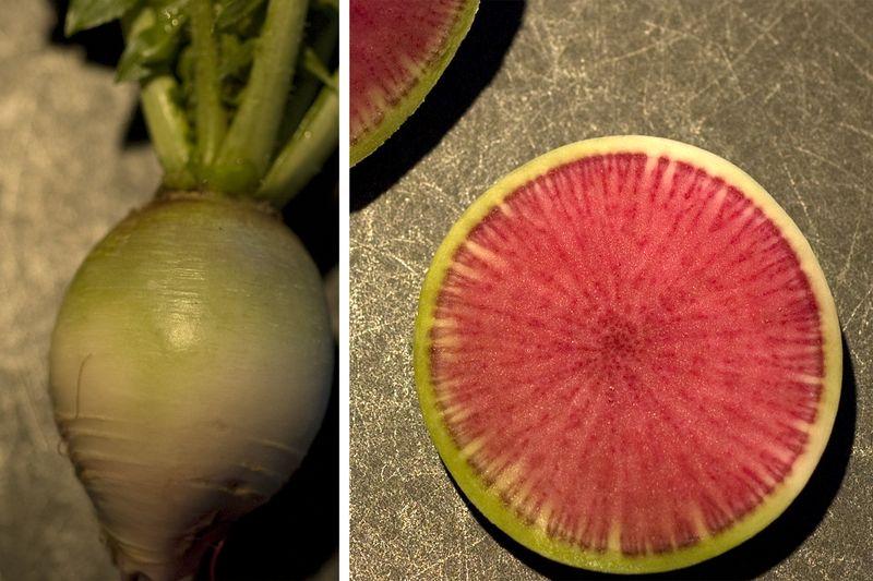 PlanterTomato_WatermelonRadish