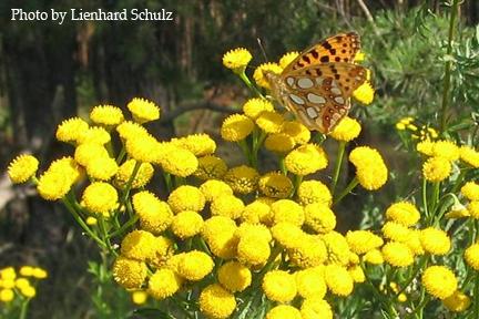 Feed Your Bees Naturally Best Flowers For Honey Plantertomato Vegetable Gardening