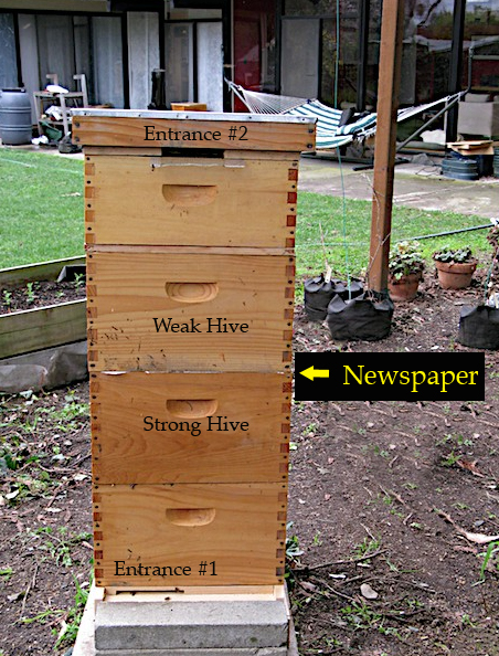 Combined Hive