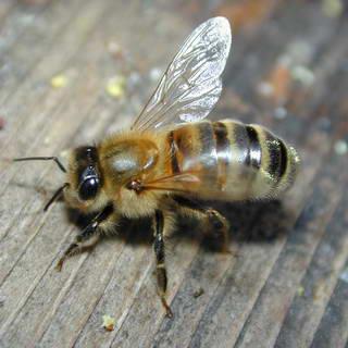 1-bee-1