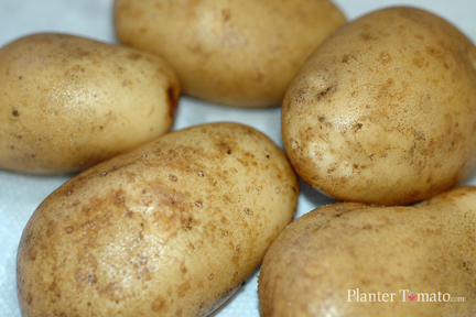 Maris Piper Potato