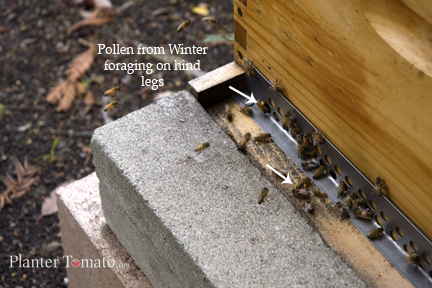 Bees In Winter 2