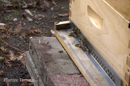 Bees In Winter 1