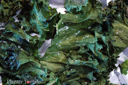 ... kale chips martha stewart s sea salt lemon kale chips sweet salty kale
