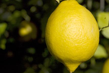 Lemon PlanterTomato.com