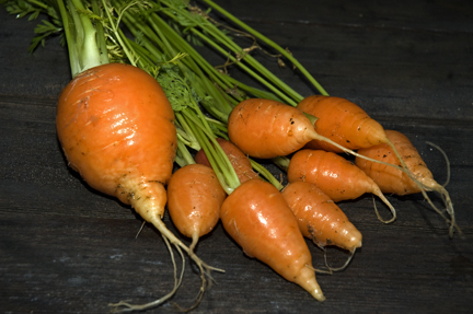 Chantenay Carrots 2